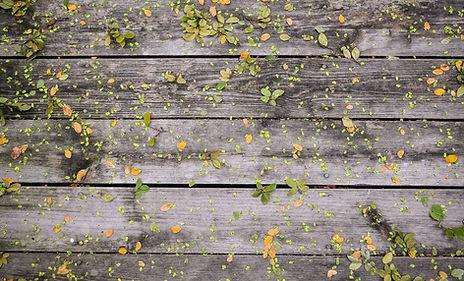 Flowers on Wood
