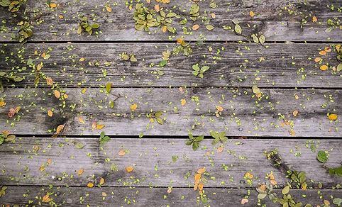 On Wood Çiçekler