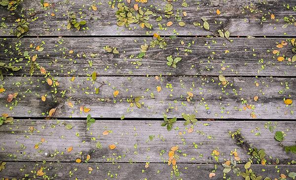 Fleurs sur bois