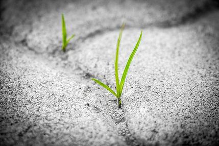 grass-1913167_1920.jpg