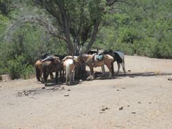 Horseback riding Chile
