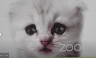 """""""I am not a cat."""" Lessons from the Zoom Courtroom"""