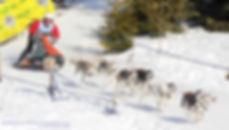 Roderick Glastra 8 honden klasse EK 2020