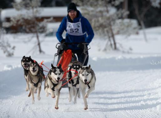 EK SNOW VERPLAATST VAN  FALUN NAAR ÅSARNA !
