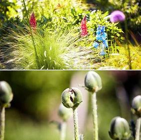 Wonderful plants on display