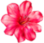 exotic-pink-flower-png-clipart-picture-1