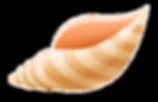 249-2492231_download-sea-shell-sea-shell