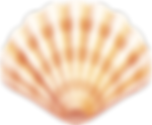 sea-clam-shell-11547094783uotmq0pskj.png