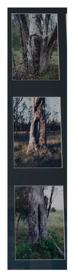Scarred Trees1web.jpg