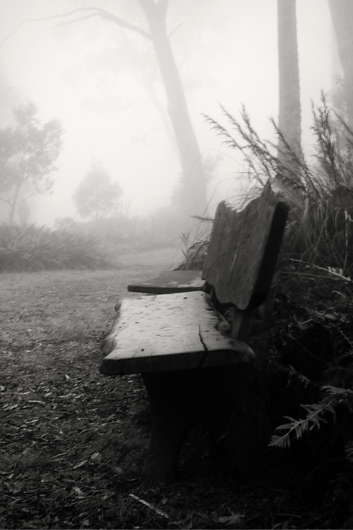 Bench Seat on a Misty Day - 20 x 30 inch