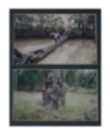 Scarred Trees2web.jpg