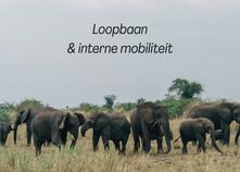 Loopbaan & interne mobiliteit