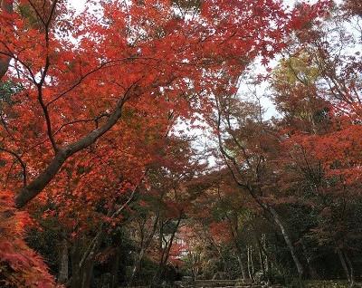 桂の紅葉とおやつ