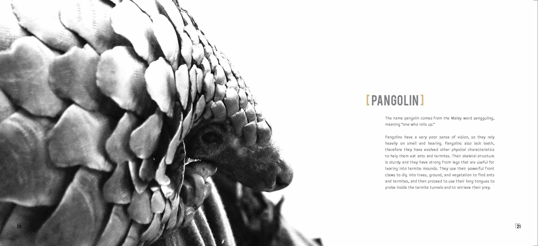 Pangolin (003)_Page_12