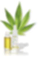 csm_probioderm_Hanfo__l_Pflanze_200b53ec