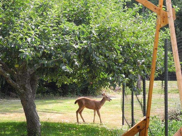 ja-deer-fence-3.jpg