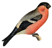 Links for Bird Lovers   The Fat Finch