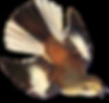 Bird Brain Blog | The Fat Finch