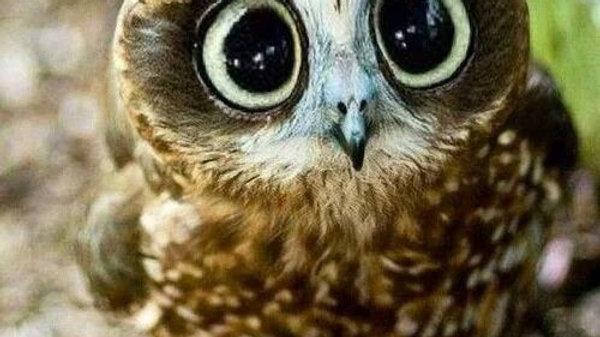 Preschool - 2 Day Owl Class