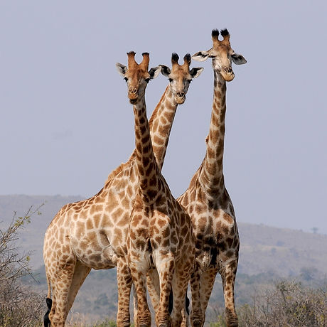 south-africa-927281_1920.jpg