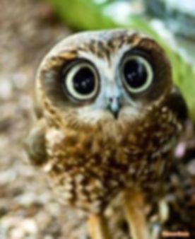 owl class.jpg