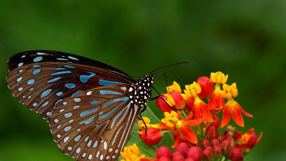 Preschool - 4 Day Butterflies Class