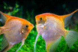 fish class.jpg