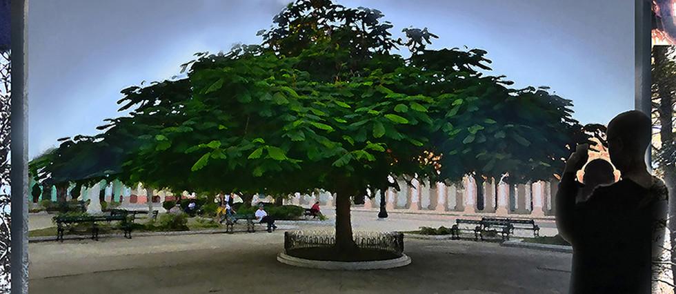 02_TreeWatching.jpg