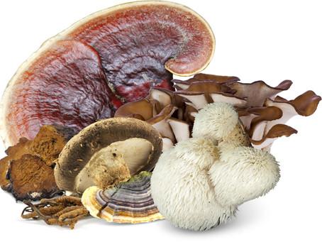 Les champignons (mycothérapie) plus forts que les virus ?