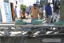 Marcos, A fish house worker unloading a boat.
