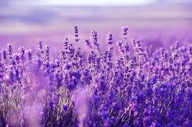 Flori cu propritati terapeutice spectaculoase