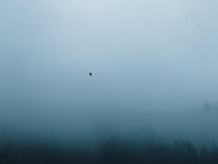Blue Mist #7