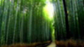 bamboo trees.jpg