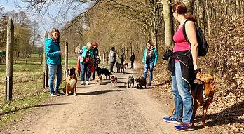 Kurse Hundeschule Büdingen