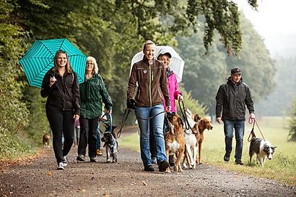 Hundeschule Büdingen Hundetraining in der Gruppe