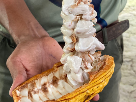 An Aphrodisiac Bean: Cocoa