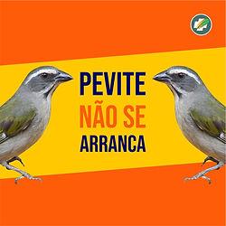 post_pevite_1.jpg