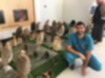 hospital de falcões