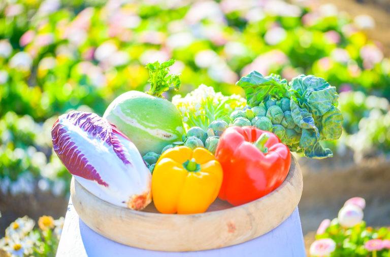 畑から直送の野菜たち