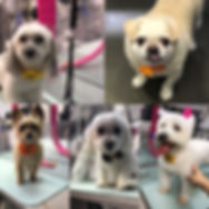 DOG GROOMER BIG COVE ALABMA