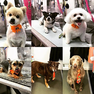 Dog Groomer that come to you