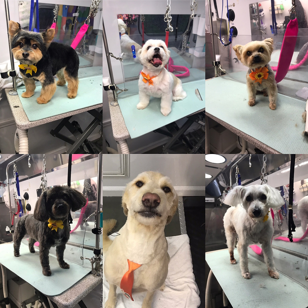 dog groomer in Hampton Cove Alabama