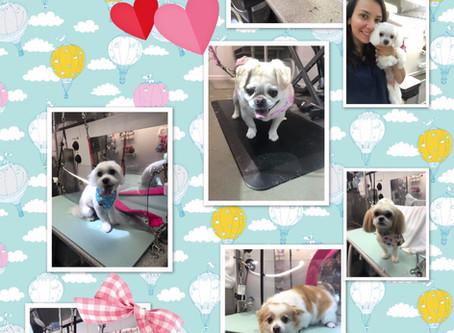 Dog Groomer in Owens Cross Roads Alabama-Premier Spa Mobile Pet Grooming