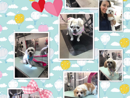 Dog Groomer in Owens Cross Roads Alabama-Premier Spa Mobile Pet Grooming