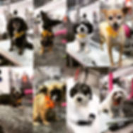 MOBILE DOG SPA BIG COVE ALABAMA.jpg