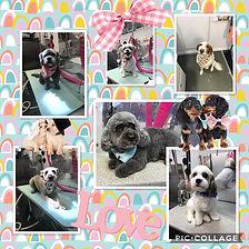 Mobile dog grooming in Hampton Cove,AL.J