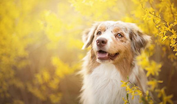 Mobile dog grooming Pickerington ohio