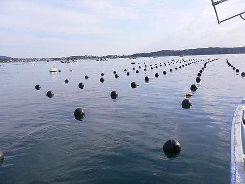 天成真珠 漁場