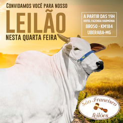 São Francisco Leilões
