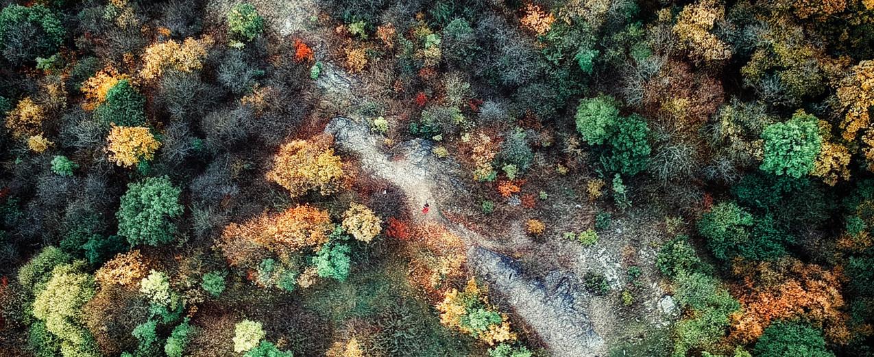 공중 숲 샷